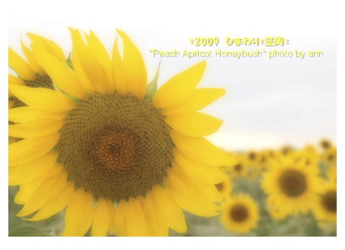 f0202957_14405133.jpg
