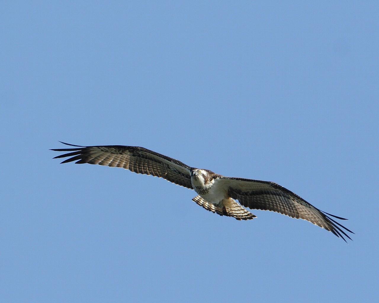 猛禽飛び物仕様のカメラ_f0105570_21475914.jpg