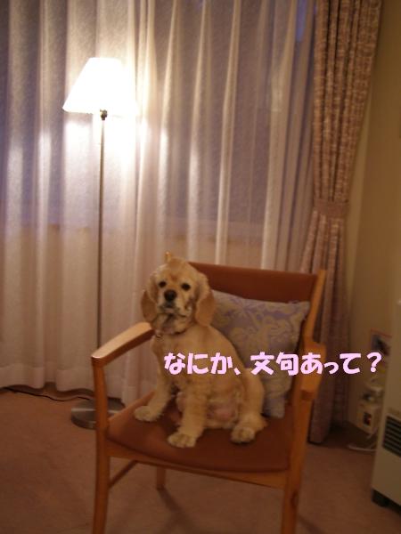 b0067012_1371011.jpg