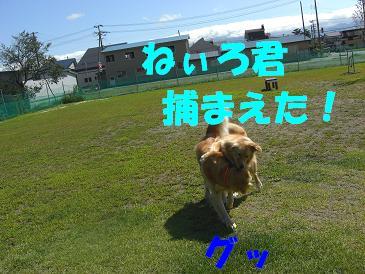 f0170713_15225953.jpg