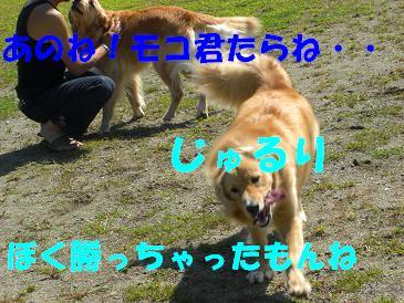 f0170713_1523114.jpg