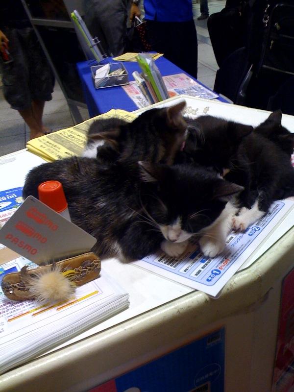 PASMOの宣伝ギャルに子ネコが大抜擢されてました。@池袋_c0069047_20255840.jpg