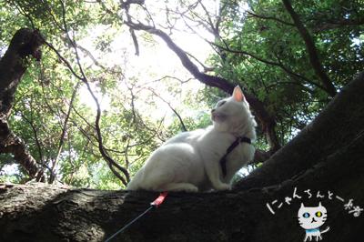 お城公園のお散歩 ~久々に森と交信~_e0031853_11435820.jpg