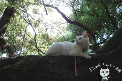 お城公園のお散歩 ~久々に森と交信~_e0031853_11443423.jpg