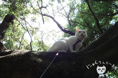 お城公園のお散歩 ~久々に森と交信~_e0031853_11451326.jpg