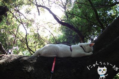 お城公園のお散歩 ~久々に森と交信~_e0031853_11472113.jpg