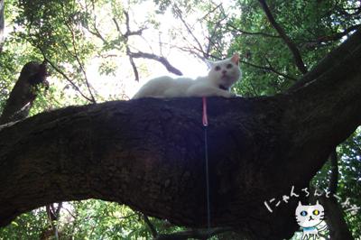 お城公園のお散歩 ~久々に森と交信~_e0031853_1147481.jpg