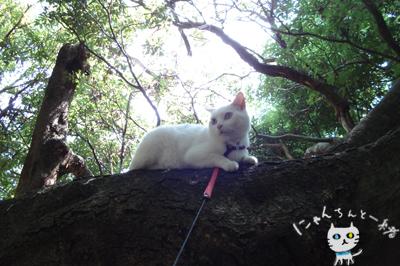 お城公園のお散歩 ~久々に森と交信~_e0031853_11482187.jpg