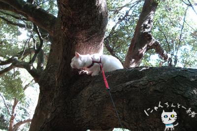 お城公園のお散歩 ~久々に森と交信~_e0031853_11571352.jpg