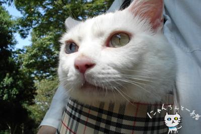お城公園のお散歩 ~久々に森と交信~_e0031853_126523.jpg