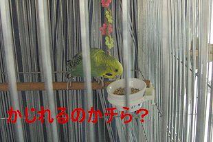 f0196665_0193268.jpg