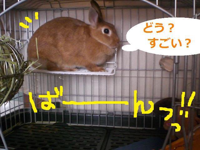 d0134977_1021592.jpg