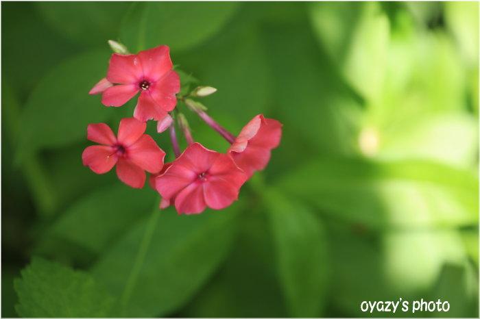 今日は花と・・・_a0071514_21122376.jpg