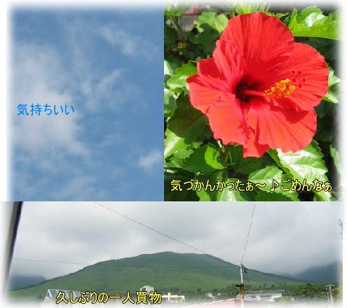 f0082367_16292698.jpg