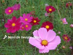 f0150377_14413641.jpg
