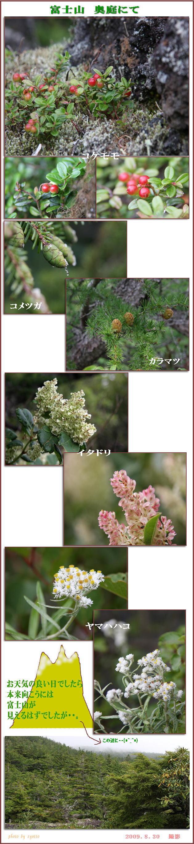 f0164592_194759.jpg