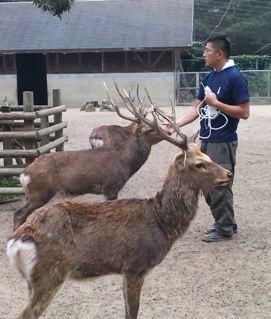 鹿・・・しか(歯科)つながり(笑)_f0144003_22574383.jpg