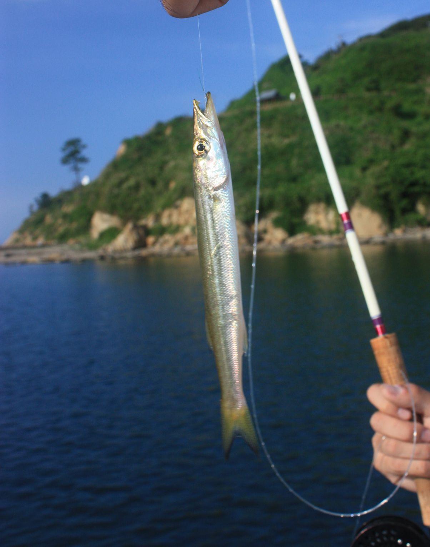 カマス釣り_e0150433_1334035.jpg