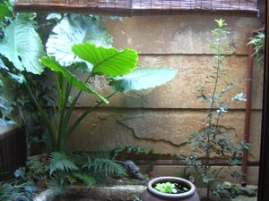 近頃の植物たち_e0153039_17375189.jpg