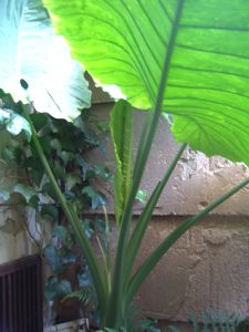 近頃の植物たち_e0153039_1739542.jpg