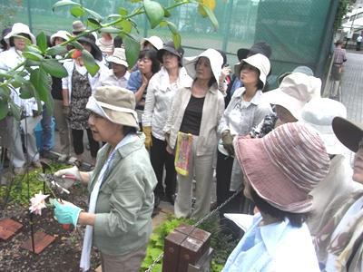 「バラの小径」で野村先生の剪定実習_a0094959_12253095.jpg
