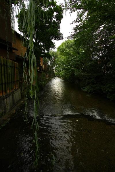 大人の京都・・・白川南通り_e0155066_1984593.jpg
