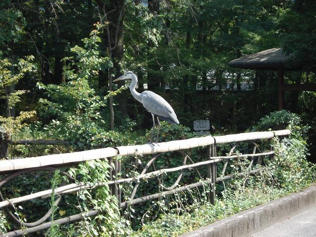 湯の坪川の住人たち_c0140982_1626378.jpg