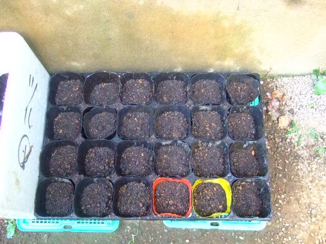 秋野菜の苗が育ちません.....何故?_b0137932_1053026.jpg