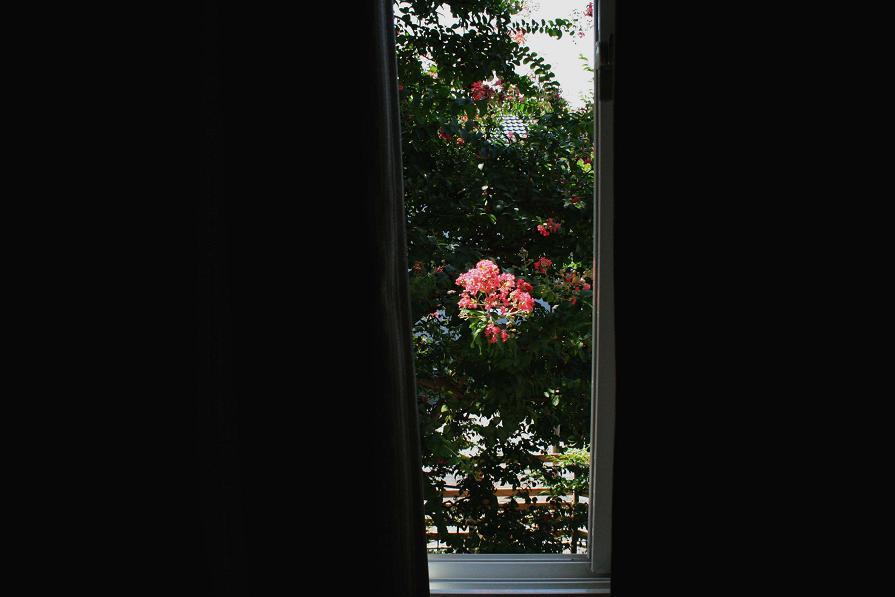 ガラス越しに見る百日紅      ~週末の大安吉日の朝~_a0107574_7241854.jpg