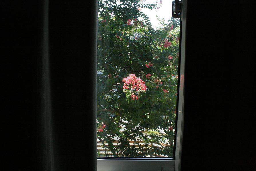 ガラス越しに見る百日紅      ~週末の大安吉日の朝~_a0107574_724993.jpg