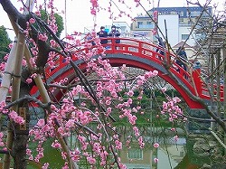 亀戸天神社 (十社巡り 6)_c0187004_23265135.jpg