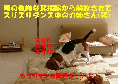 f0121712_163022.jpg