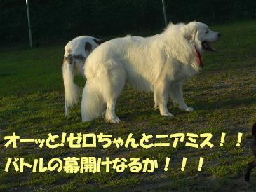 f0170713_1013581.jpg