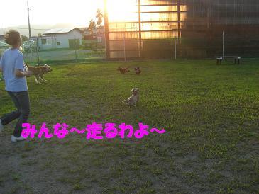 f0170713_10144849.jpg