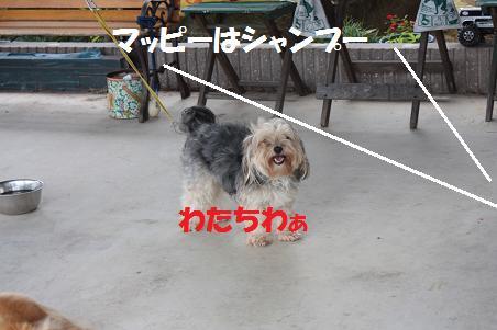 f0114128_21134494.jpg