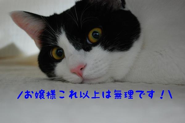 c0181639_2234040.jpg