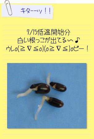 a0121563_2012325.jpg