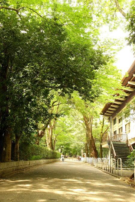 名残り惜しい 夏の京都_e0155066_9393186.jpg