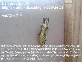 b0147203_10574423.jpg