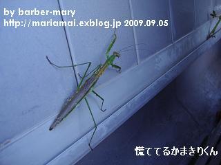 b0147203_10581287.jpg