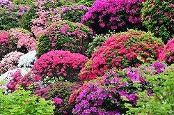 根津神社 (十社巡り 8)_c0187004_212338100.jpg