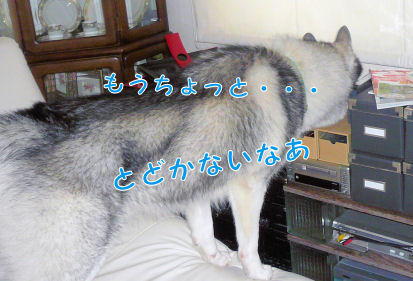f0112407_15341229.jpg