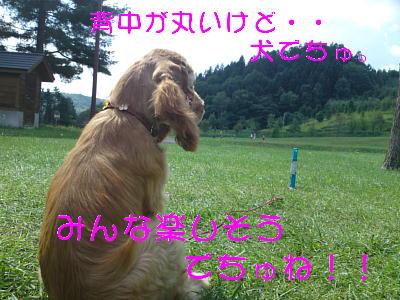 b0176428_12512880.jpg