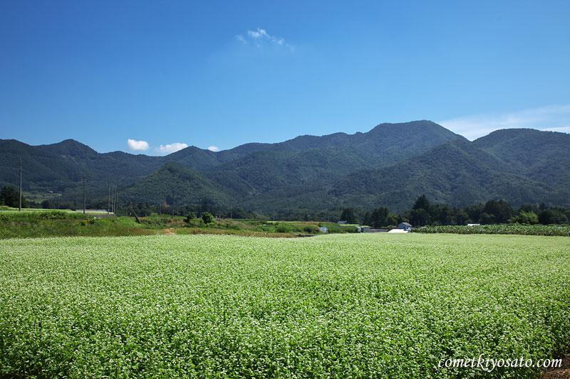 八ヶ岳とそばの花_b0179231_15241945.jpg