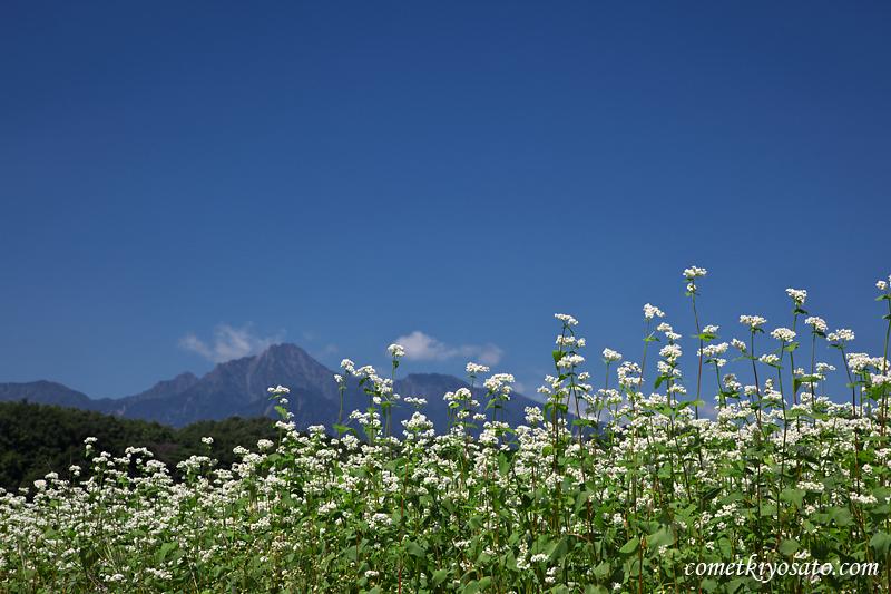 八ヶ岳とそばの花_b0179231_1524319.jpg