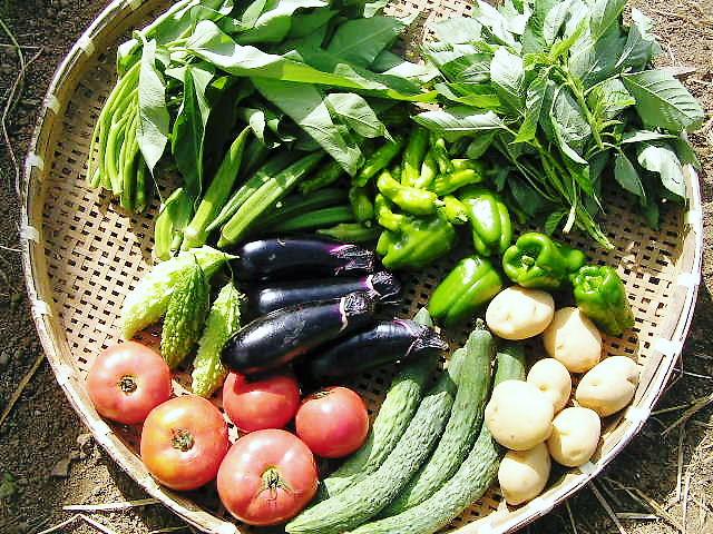 毎日が野菜の日_c0156749_15404633.jpg