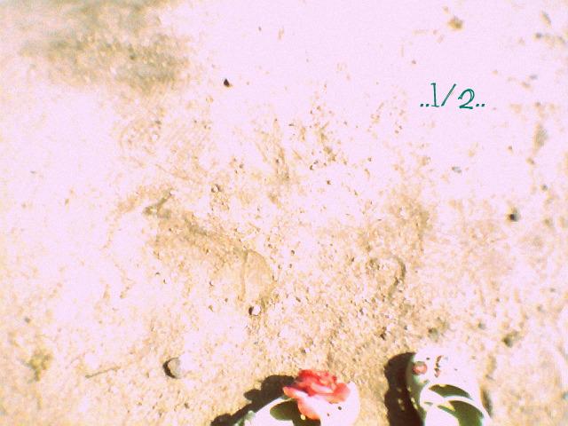 f0139758_14102468.jpg