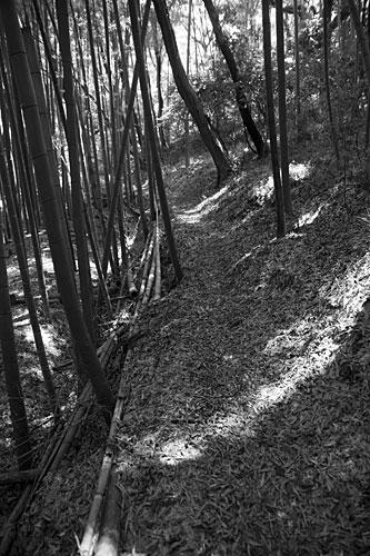 2009/09/07 布田道_b0171364_951331.jpg