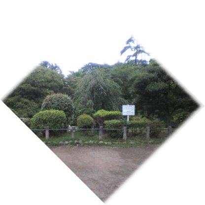 d0099166_165319.jpg