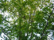 秋探しウォーキング_b0102572_17442710.jpg